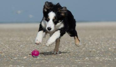 Cani terremotati e abbandonati aiutano malati cardiopatici