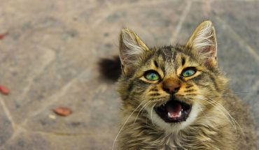Legge su animali, molto più sensibile la regione Lombardia