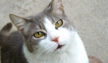 Gattino Bear, andava a trovare ogni giorno il vicino di casa