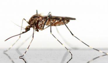 Puntura zanzara rimedi naturali: come alleviare il fastidio ed il prurito