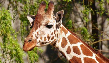 Animali da circo: sanzionato il Circo Medrano a Montecatini Terme