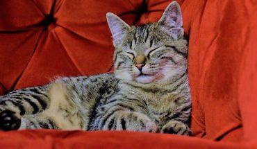 Netflix con animali domestici: otto persone su dieci