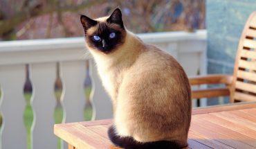 Gatto e unghie: così si evita che possa rovinare mobili e divani