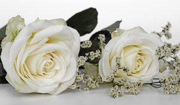 Matrimonio gratis o economico, con il Wedding Blog