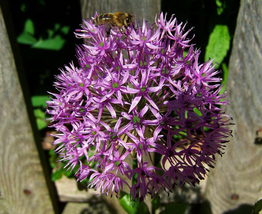 Bulbi da fiore cosa sono