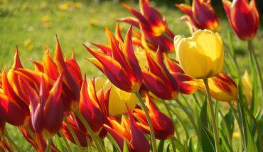 Bulbi da fiore e loro durata: ecco le informazioni